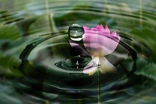 drop-of-water-2092495_640